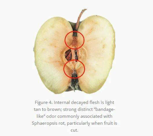 水果泛起一种情况千万别吃,搞不好会食物中毒