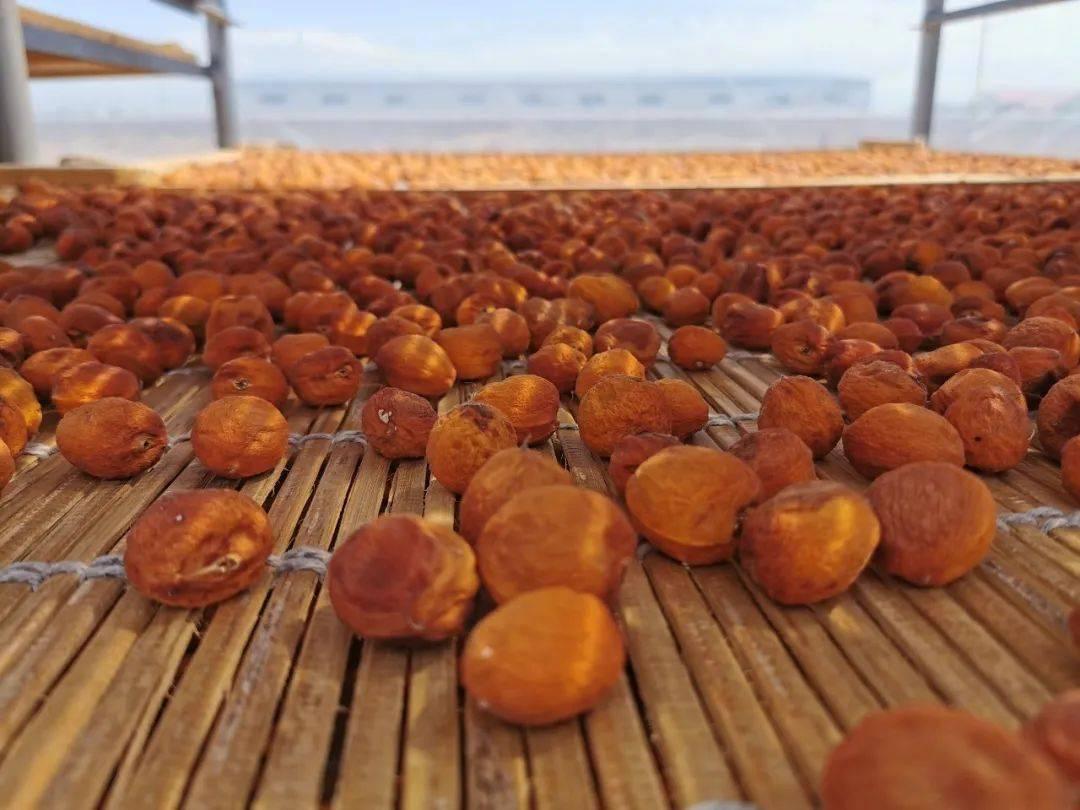 抢庄牛牛棋牌游戏:◑ 来自新疆的树上杏干,靠味道打动了无数吃货~