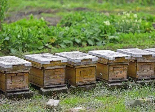 农村种田:农村有两个好的种田项目,可以充分利用资源,一年轻松赚5万