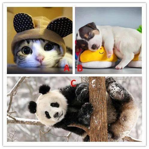你最喜欢哪种动物?测试你会栽到哪种男人手上?