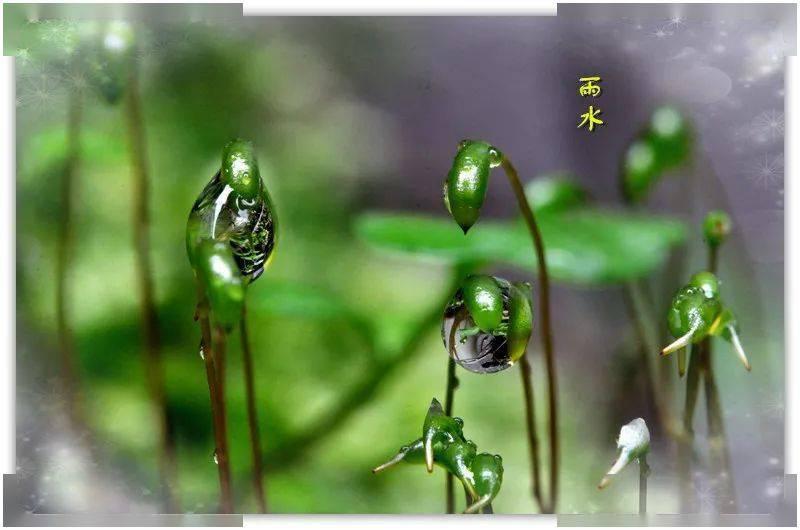 雨水,有哪些含义?