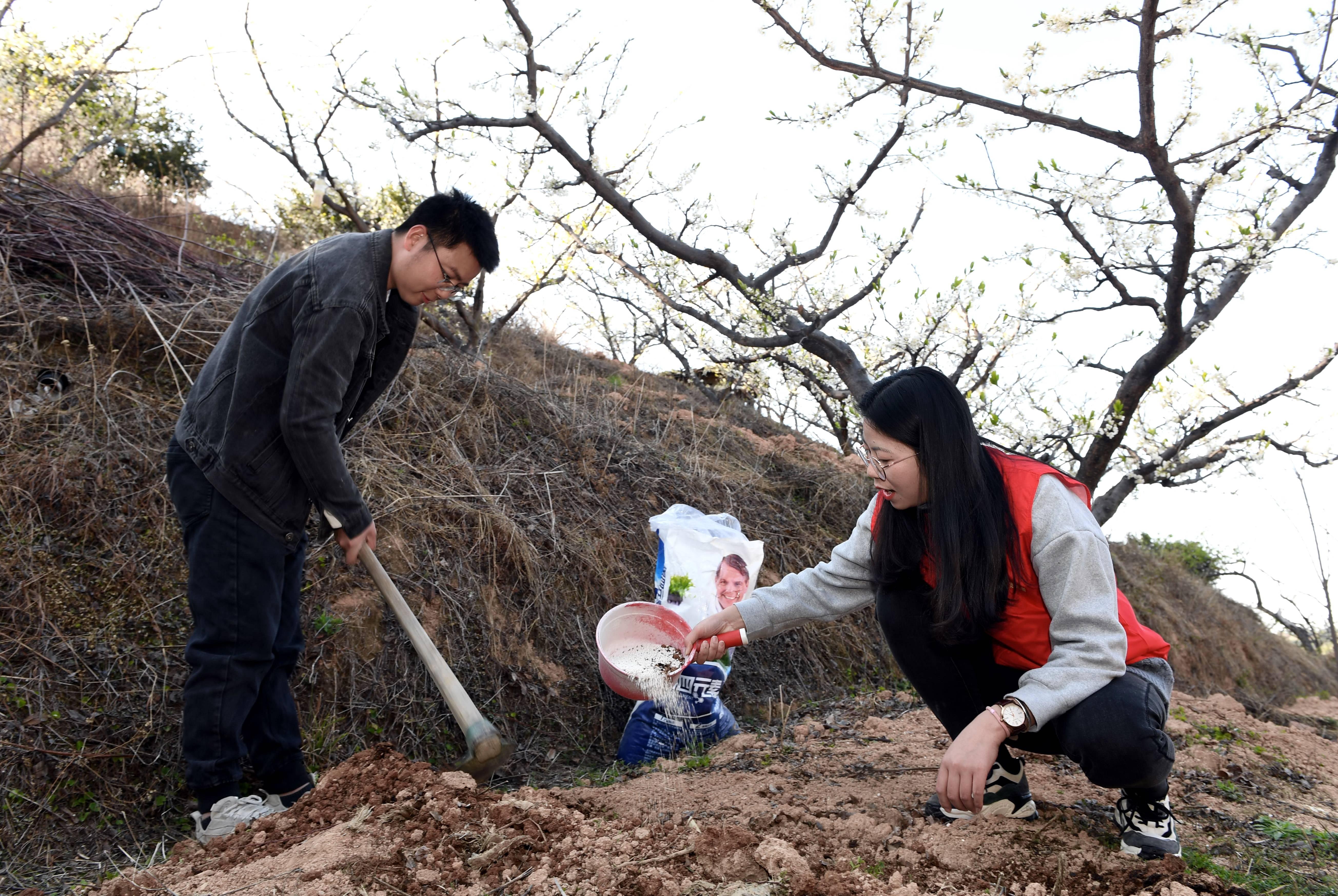 福建连城:智慧配方施肥助力农业提质增效
