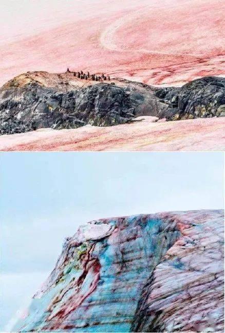 【1017丨身边】警惕!南极又出现红色的雪……