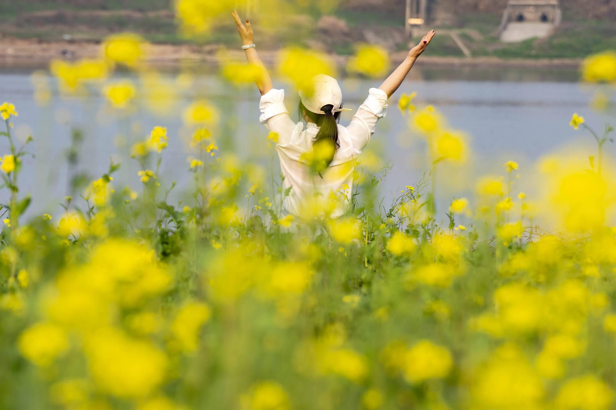 湘江藏的这座小岛 送你一岛小黄fa