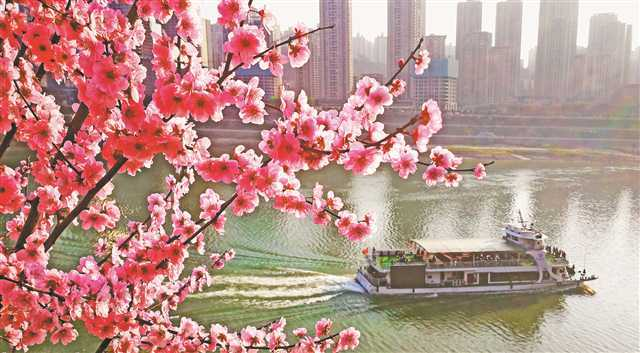 看效果丨今年春天,美丽山城为何变身美丽花城?