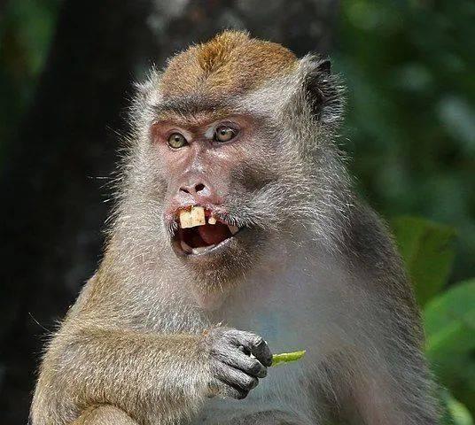 中国禁止出售野生动物,美国却急用猴子做新冠实验
