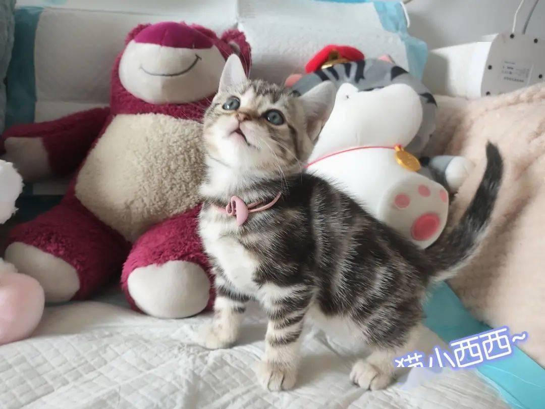 猫咪地址链接有吗 猫咪猫咪永久官网入口