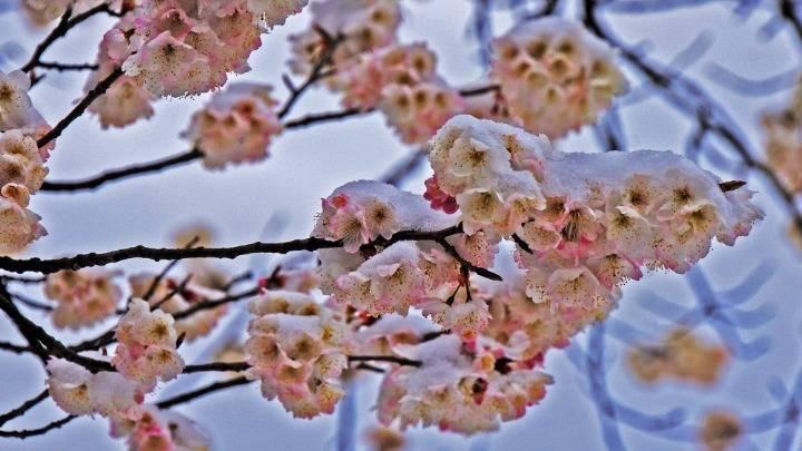 湖北襄阳:九路寨生态旅游区雪后风光如画