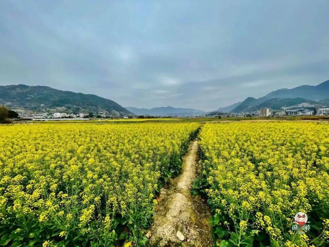 太美了!这个距福州2h不到的小婺源,花开正盛,赶紧约!