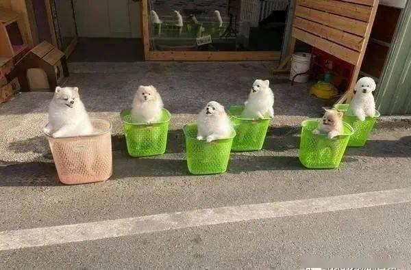 6只萌犬装篮晒太阳同款站姿亮了,路人融化狂问:要卖的吗?
