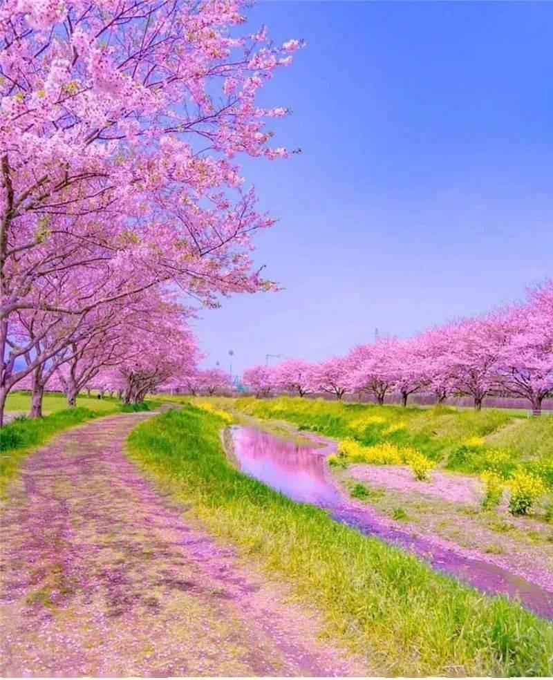 生活万岁:三月,相约在最美的春光里 网络快讯 第4张