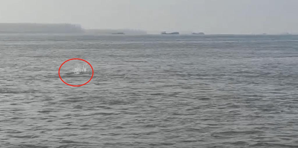 拍到了野生群!长江铜陵段发现约10头野生江豚