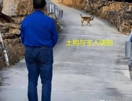 16岁老狗知道自己寿命所剩不多,为了不让主人伤心,做出这样诀别...