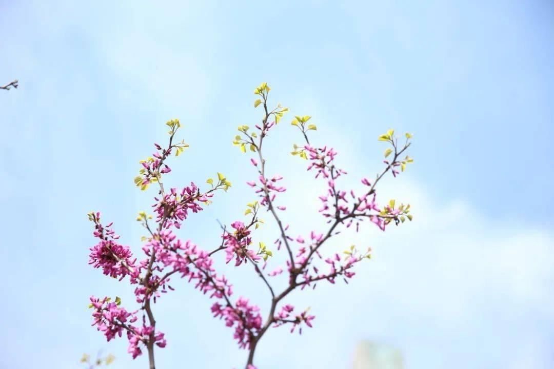 七星彩:26个春天的成语,原来都出自诗词 网络快讯 第4张