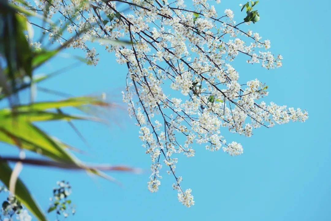 七星彩:26个春天的成语,原来都出自诗词 网络快讯 第2张