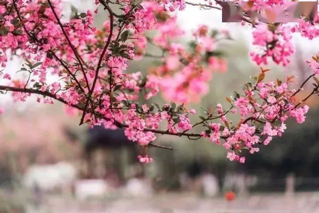 wps下一页:三月桃花开,春天按时来 网络快讯 第2张