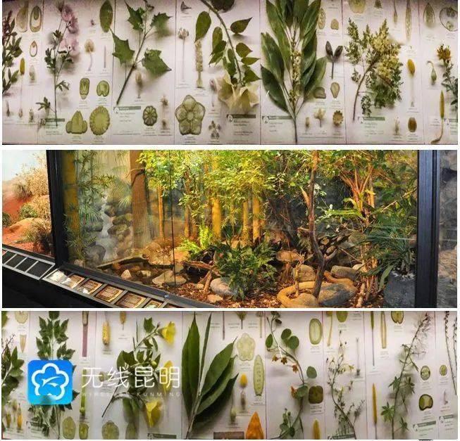 COP15盛会10月举办 昆明准备的怎么样了?看这里!