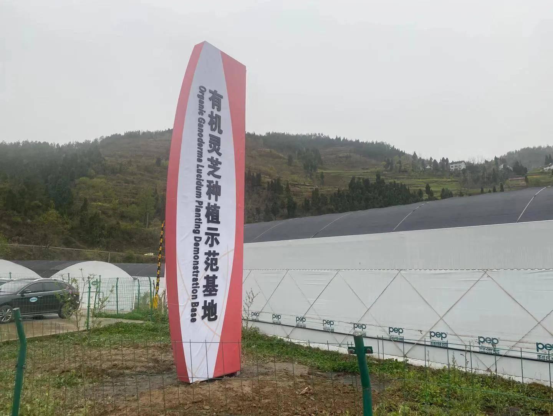 2021年中国·朝天食用菌产业创新发展大会在广元市朝天区召开