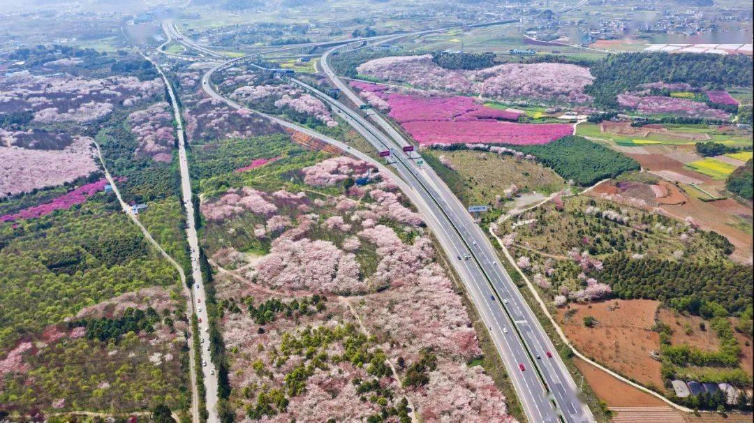 美过日本,不输武汉,全球最大的樱花基地竟在中国,还免费! (图19)