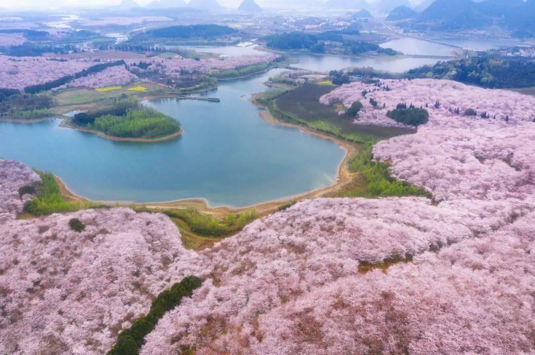 美过日本,不输武汉,全球最大的樱花基地竟在中国,还免费! (图7)