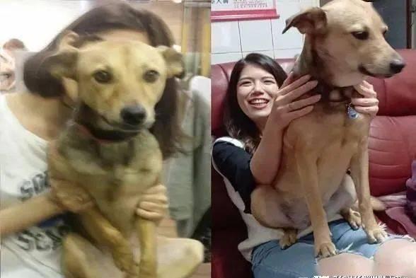 狗狗4年前与4年后坐一样的大腿,姐姐的腿已经不堪负荷啦!