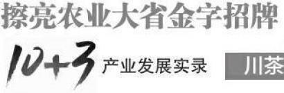 """我省春茶实现""""量价齐升"""""""
