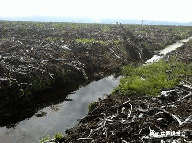 棕榈油公司威胁暹罗鳄生存?绿会国际部收到来自印尼的求助信 | 全球环境治理案例