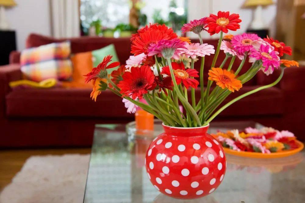 鲜花枯萎太快了,来看看这4种小方法延长鲜花保鲜期 !