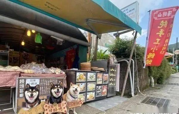 3只柴犬站在门口招揽客人,仔细一看才发现只有1只是真狗!
