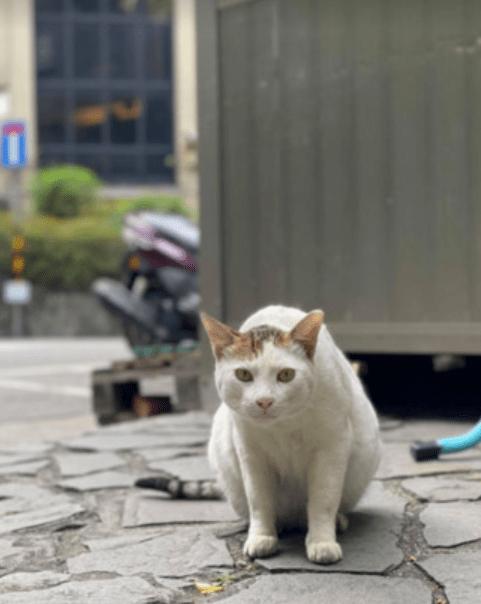 流浪猫成小区恶霸,在保安和小区爱心人照顾下,变友善了!