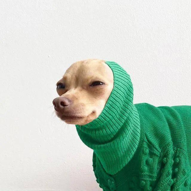 这只「名媛狗」火了,在网上晒私生活照,引27万网友围观