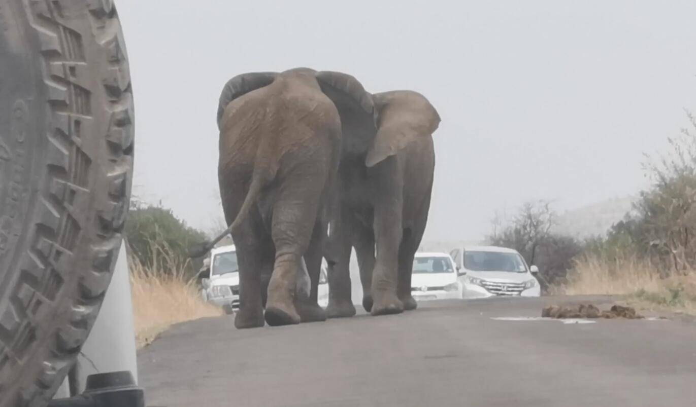 梦见自己生了两头大象 梦见大象生小象的过程