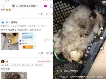 """太恶劣!""""宠物盲盒""""乐通LT118app爆卖,小猫小狗竟被塞货"""