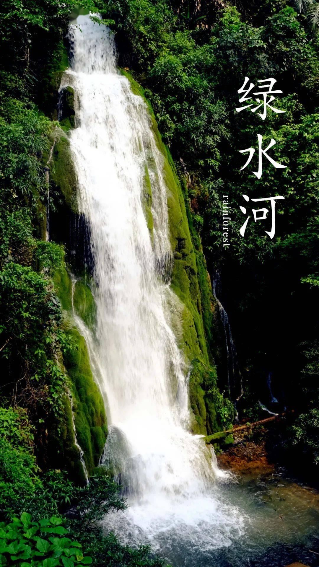 你知道吗?云南这个地方可以观赏到热带雨林哦~