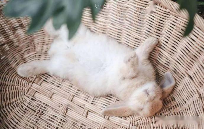 遽然睡着的兔宝贝
