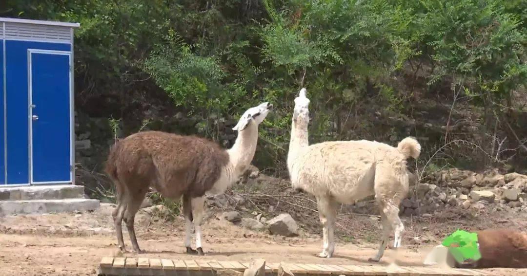 走起→到灯塔动物园看动物喽!