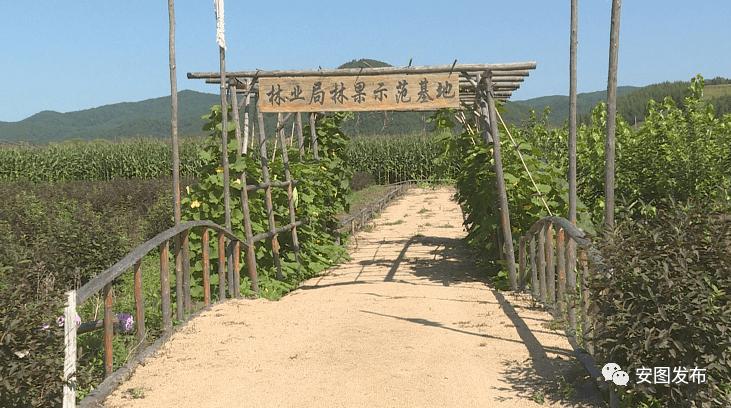 安图的gdp_吉林省安图县长一行来访泛华共谋经济发展新路径