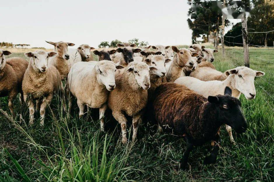 农村养殖贷款政策,你知道吗?