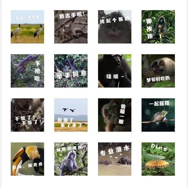 COP15 | 哇!这组表情包太萌了,快来下载